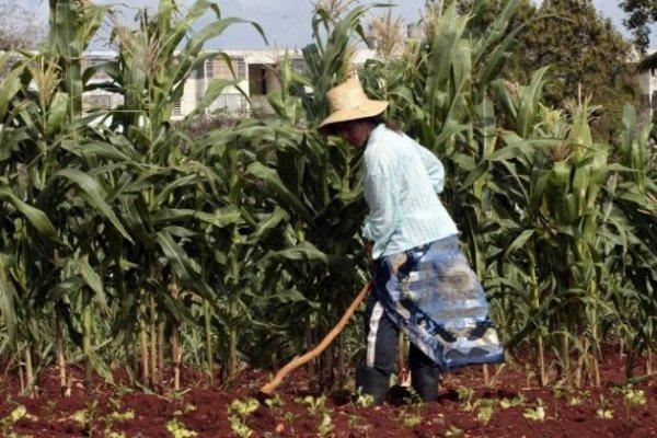 Producir más alimentos, desafío permanente en Cuba