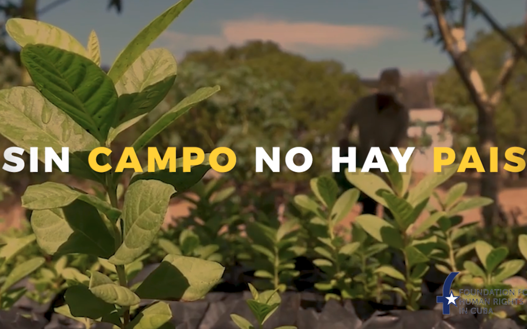 """Without free farming there is no Country""  Campaign to prevent a food catastrophe is launched inside Cuba"